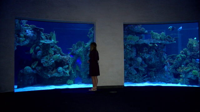 WOW aquarium wide_1505731613029.jpg