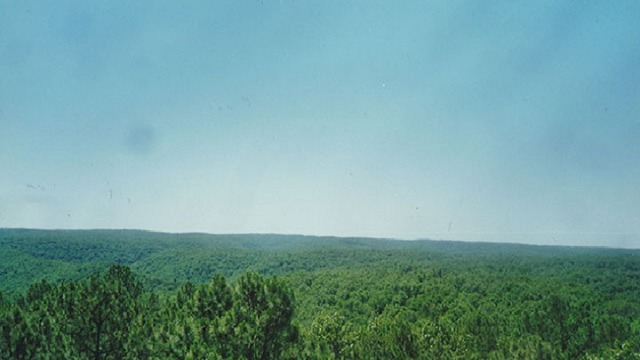 Birch Tree Man Indicted for Stealing Timber from Mark Twain National Forest