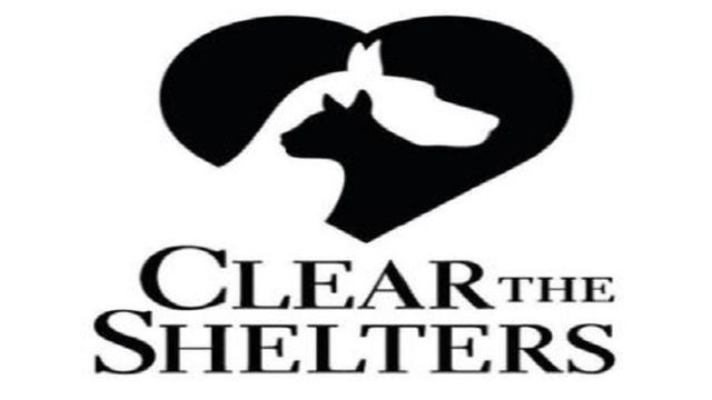National Clear the Shelters Day Helps Find Animals Homes