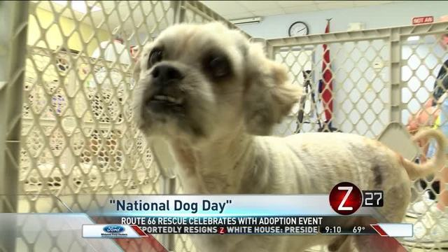 Route 66 rescue puts on meet and greet adoption m4hsunfo