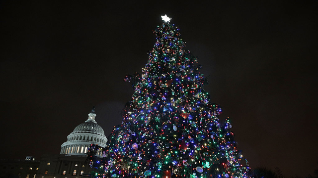 us capitol tree stops in springfield tuesday