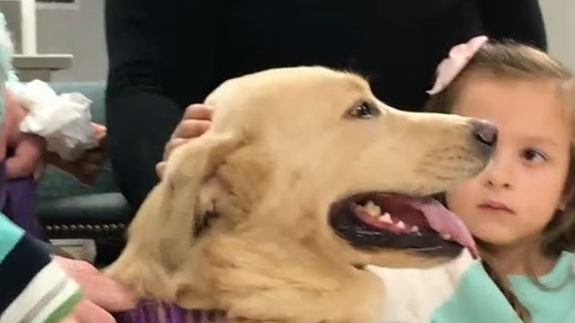 Dog With Failing Kidneys Receives Transplant