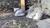 Dickerson Park Zoo Welcomes Two New Foxes